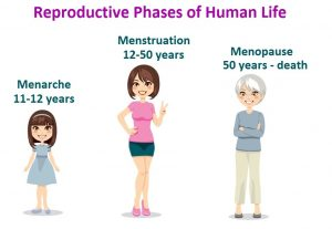 Your Menstrual Cycle – Menarche and Menopause…